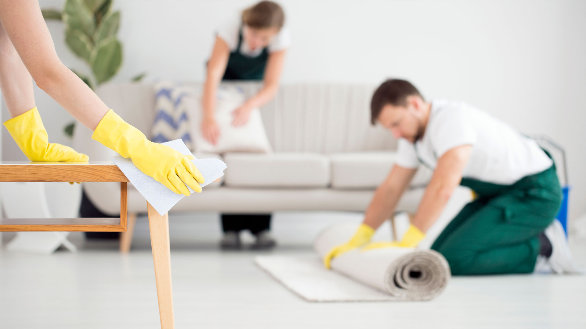 Sofa Cleaning Lavender Bay